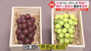 【悲報】韓国が日本の高級ブドウ「ルビーロマン」を盗んで栽培!韓国農家「日本は先進国なんだから大目に見ろ」